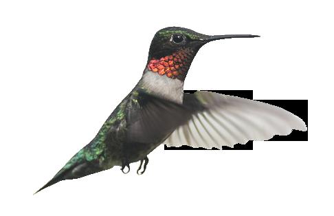 kolibro kontakt